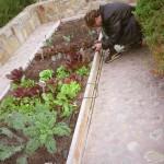 Wes photographing organic garden (Santa Barbara, Dec. 2004).